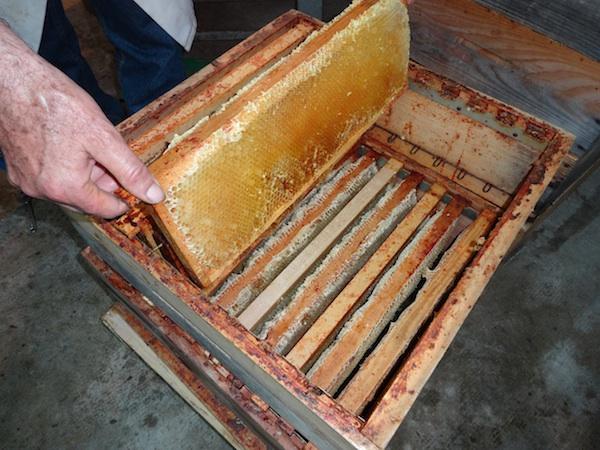 Cadres remplis de miel sur les hausses