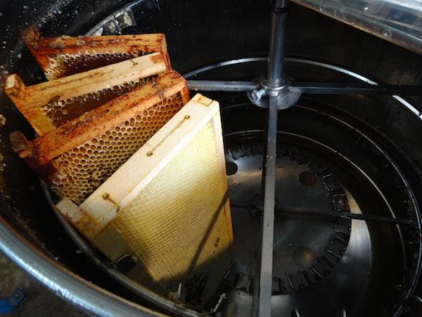 Cadres remplis de miel dans la centrifugeuse