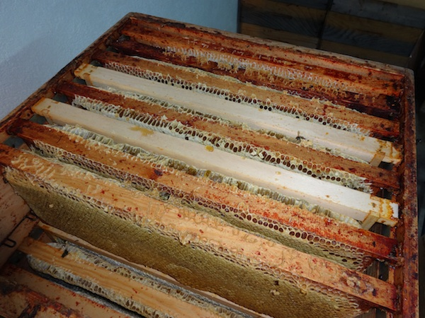 Rayons remplis de miel dans un cadre de ruche